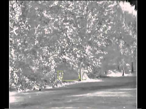 Low Light CCTV Detection Trees